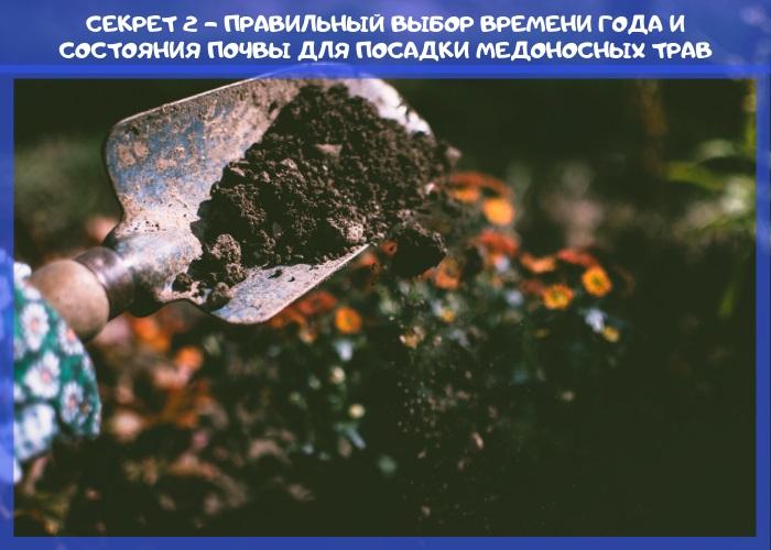 правильный выбор времени года и состояния почвы для посадки медоносных трав